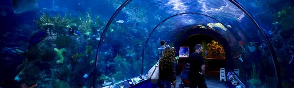 Audubon Aquarium museum kids family fun in new orleans