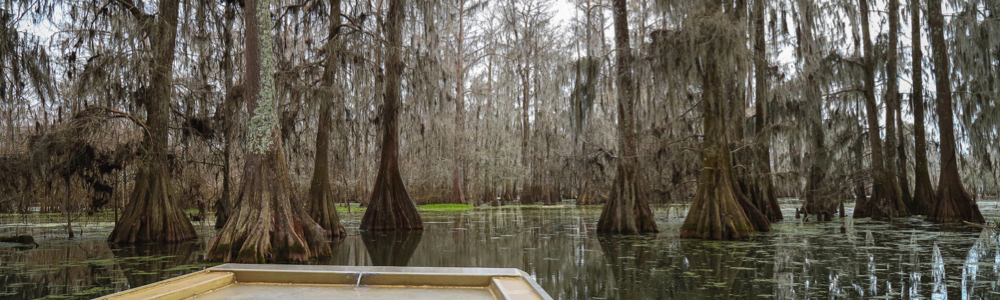 New Orleans Swamp Tours family fun in new orleans cypress