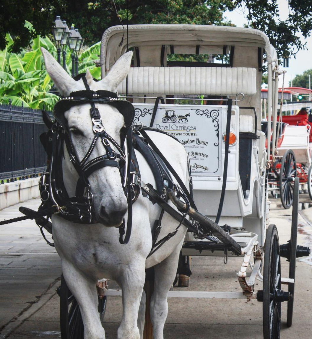Royal Carriages Family Fun In New Orleans