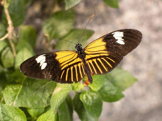 Audubon Butterfly kids children family fun in new orleans