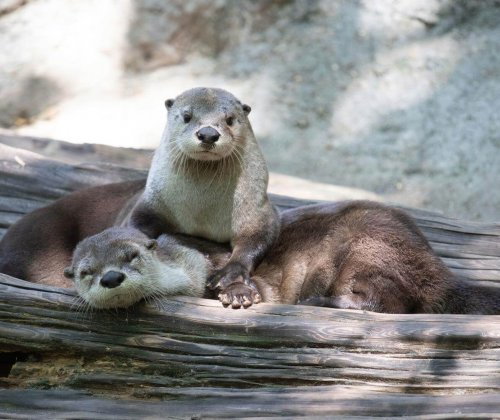 Audubon Zoo kids children family fun in new orleans