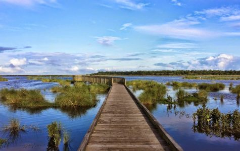 Bayou Sauvage Wildlife Refuge New Orleans Fishing & Boating family fun in new orleans