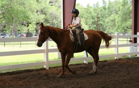 Cascade Stables New Orleans Horseback Riding family fun in new orleans
