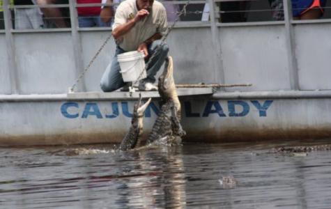 Cajun Pride Swamp Tours best swamp tours in louisiana fun in new orleans