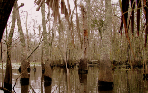 best swamp tours in louisiana fun in new orleans