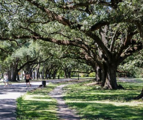 Fun In New Orleans Audubon Park